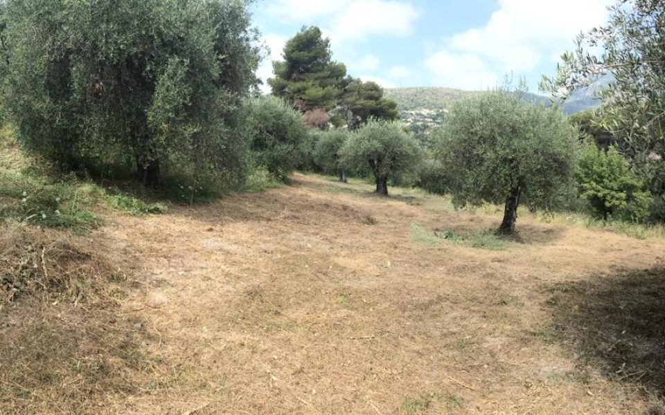 Nice Rimiez – Nice plot of land 3900 sqm with nice view close to the Center